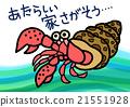寄居蟹 節肢動物 甲殼動物 21551928