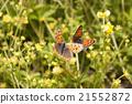 花朵 昆蟲 漏洞 21552872