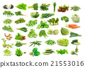 Vegetables collection isolated on white background 21553016