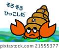 寄居蟹 節肢動物 甲殼動物 21555377