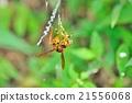 꿀벌, 거미줄, 벌 21556068