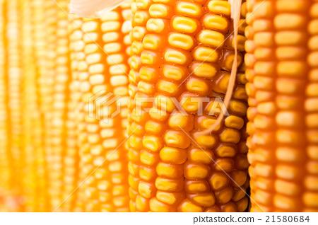 Yellow corn cob 21580684