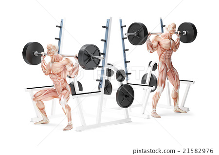 Barbell Squat Exercise. Anatomical 3D illustration 21582976