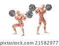squat, barbell, anatomical 21582977