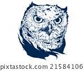 owl portrait 21584106