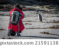 Photographer shooting gentoo penguin on sandy beac 21591138