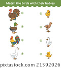 Matching game for children, farm birds and babies 21592026