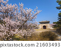 Gyeongbokgung Palace with saku, Seoul, South Korea 21603493