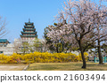 National Folk Museum with sakura, Seoul, Korea 21603494