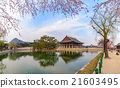 Gyeongbokgung Palace with saku, Seoul, South Korea 21603495