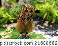 Bengal Eagle Owl 21608689