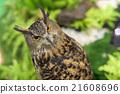 Portrait of Great horned owl 21608696