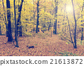 Colorful autumn trees in forest, vintage look 21613872