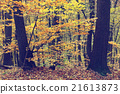 Colorful autumn trees in forest, vintage look 21613873