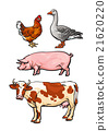 Set of farm animals on the white background 21620220