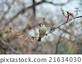sparrow, small, bird 21634030