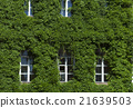 building, wall, ivy 21639503