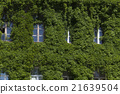 building, wall, ivy 21639504