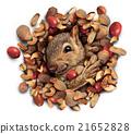 Squirrel Nut Burst 21652828