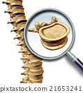 Vertebra Vertebral Column 21653241
