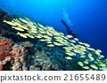 魚 四帶笛鯛 水下照片 21655489