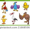 birds cartoon set illustration 21668506