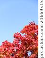 가을, 푸른, 하늘 21669515