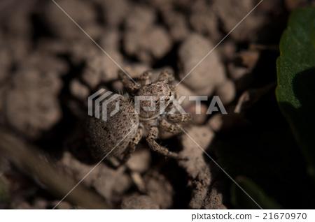 spider 21670970