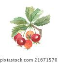 산사 나무 산사 나무 21671570