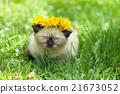kitten, spring, dandelion 21673052