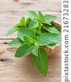 Closeup fresh peppermint  leaves. 21673283
