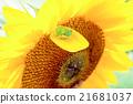 向日葵和青蛙 21681037