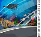 Aquarium with stingray swimming 21682158