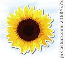 해바라기 sunflower 21684575
