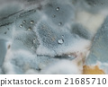 Macro view of blue mold with water drops on it 21685710