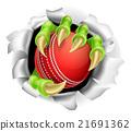 cricket, ball, hole 21691362