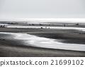 貝類收集 挖貝 海岸 21699102
