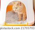 毛孩 貓 貓咪 21703703