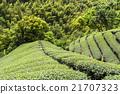 亚洲 亚洲人 生态 21707323