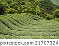 亚洲 亚洲人 生态 21707324