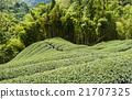 亚洲 亚洲人 生态 21707325
