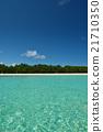 tropical beach 21710350
