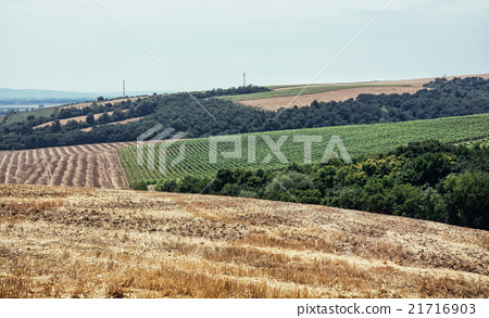 Fields and forests, cultivated land 21716903