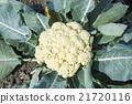 農業 成熟 營養 21720116
