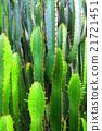 Crowding of pillars of cactus 21721451