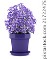 purple flowers in pot isolated on white background 21722475