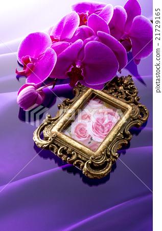 照片框架和蘭花植物蘭花背景 21729165