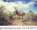 Vintage stylized photo of a female moose. 21743073