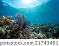 diving in colorful reef underwater 21743491