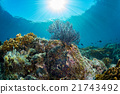 diving in colorful reef underwater 21743492